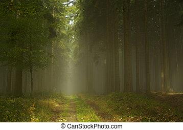 nevoeiro, 20, floresta