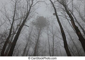 nevoeiro, em, floresta, árvores