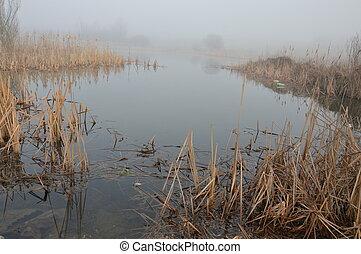 nevoeiro, em, natureza