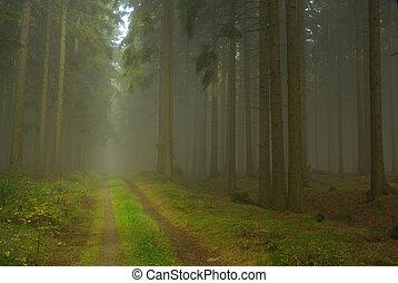 nevoeiro, floresta, 21