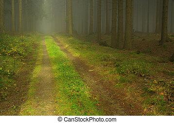 nevoeiro, floresta, 22