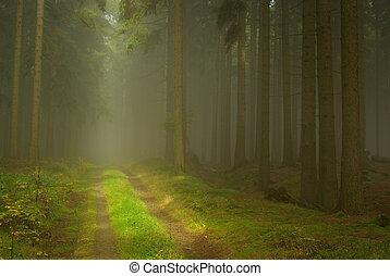 nevoeiro, floresta, 23