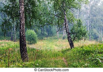 nevoeiro, floresta