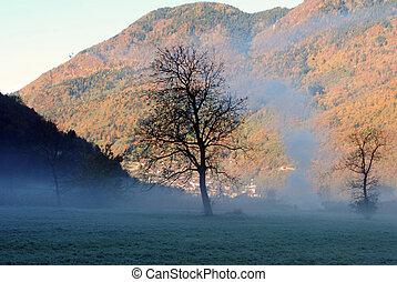 nevoeiro, manhã