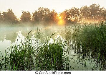 nevoeiro, rio