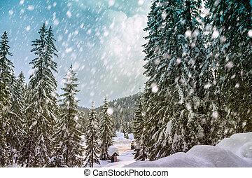 nevoso, bosque, invierno