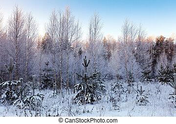 nevoso, foresta