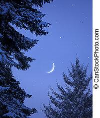 nevoso, foresta, su, natale, notte