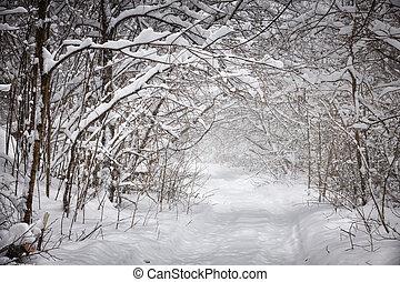 nevoso, inverno, percorso, in, foresta
