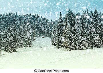 nevoso, invierno, bosque