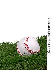 new baseball in grass