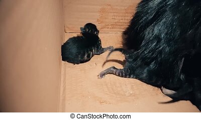 New born baby kitten searching its mother for feeding