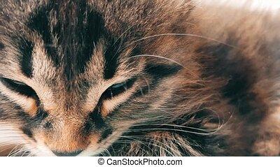 New born baby kitten sleeping under the sunlight - Closeup...