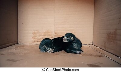 New born baby kittens moving together in a carton box -...