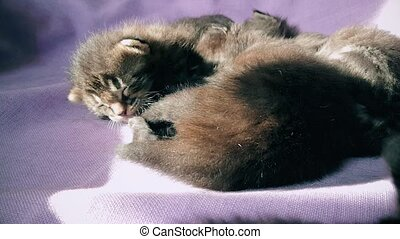 New born baby kittens resting together in a cat basket - Top...