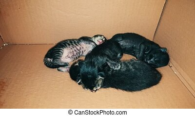 New born baby kittens sleeping together in a carton box -...