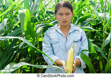 New corn yield in the hands of the farmers