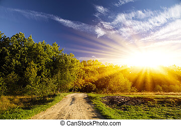 new day, sunny summer forest