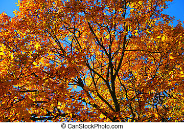 New England Fall Foliage - Fall foliage at the Boston Common...