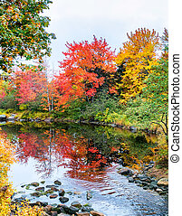 New England foliage season. Forest and water
