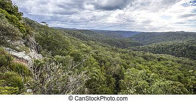 New England High Country Gondwana Rainforest - Spectacular ...