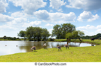 New Forest wildlife lake in summer - New Forest wildlife by...