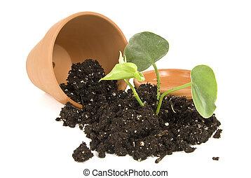 New Garden Plant