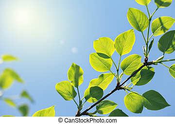 new green leaves in sun light on blue sky background