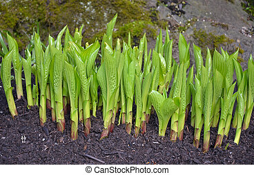 New green spring shoots