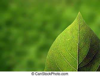 New growth: Closeup of single leaf with out of focus...