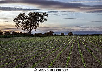 New Growth - Farmland - Agriculture