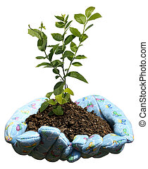 hands holding potting soil and a plant