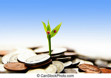 new growth - new green plant shoot growing from money