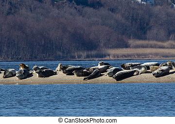 New Jersey Seals