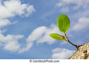 new leaf new life