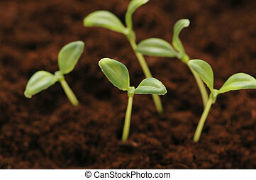 New life concept - seedlings growing in the soil - New life...