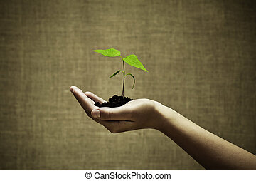 Female hand holding a new green life on burlap background. Focus on hand and plant
