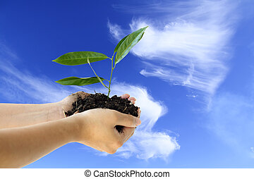 New life - Hands holding a new plant against blue sky