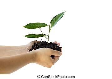 New life - Hands holding a new plant