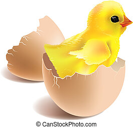 New life - Illustration of baby chick hatched from...