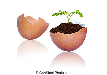 New Life in Plant Growing Out of Cracked Brown Egg Shells