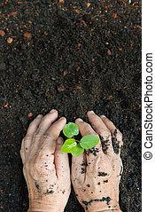 New life or environmental conversation concept