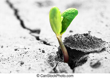 new life - Ecology concept. Rising sprout on dry ground.