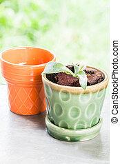 New life plant in green ceramic plant pot