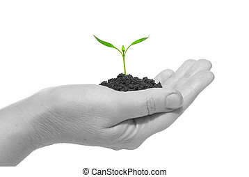 new life - plant in the hand on dark white background