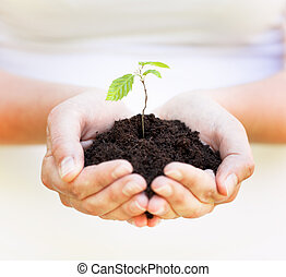 new life, spring plant in hands