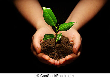 new life - Hands holding sapling in soil on black
