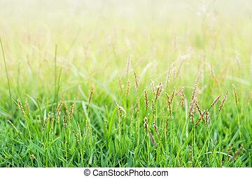 little grass