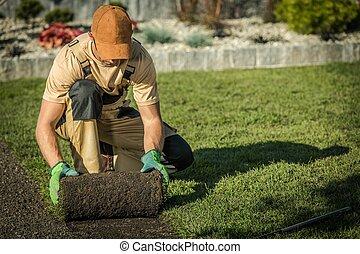 New Natural Grass Lawn