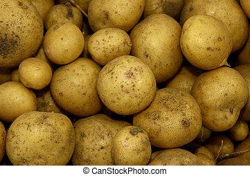 New season Potatoes for Background use